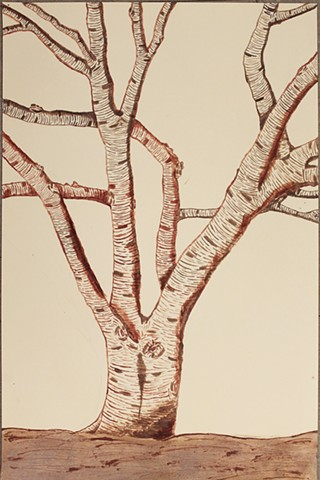 Ink Drawing of Chinese Elm outside our room - Intro to the Studio Arts Newman Freshman Chris H.