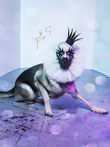 photograph of dog with a human head by christopher andres