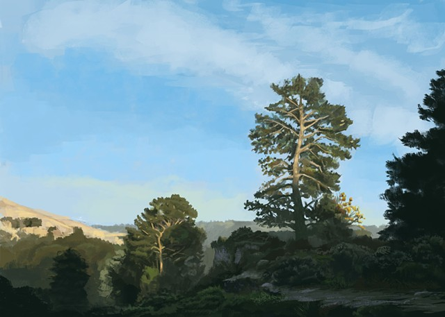 Tree and landscape in Tiburon