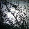 The Sound of my Garden  David Leister