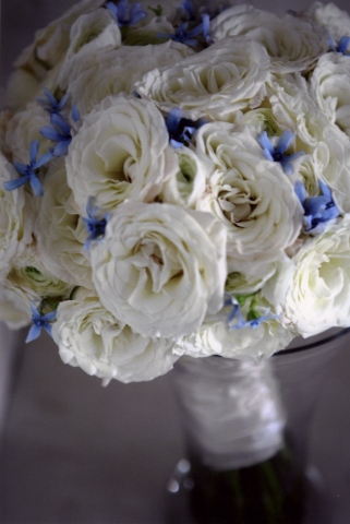 White roses, white ranunculus, and blue tweedia bridal bouquet.