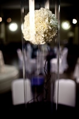"7"" White carnation pomander suspended in a 47"" clear, cylinder vase.  Suspended Carnation Pomander"