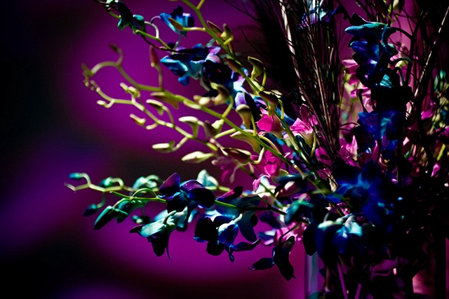 Peacock feathers paired with magenta and blue dendrobium orchid stems.