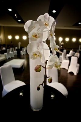 "Single white phalaenopsis orchid in a white 32"" cylinder vase.  Modern Design - White Phalaenopsis Orchid"