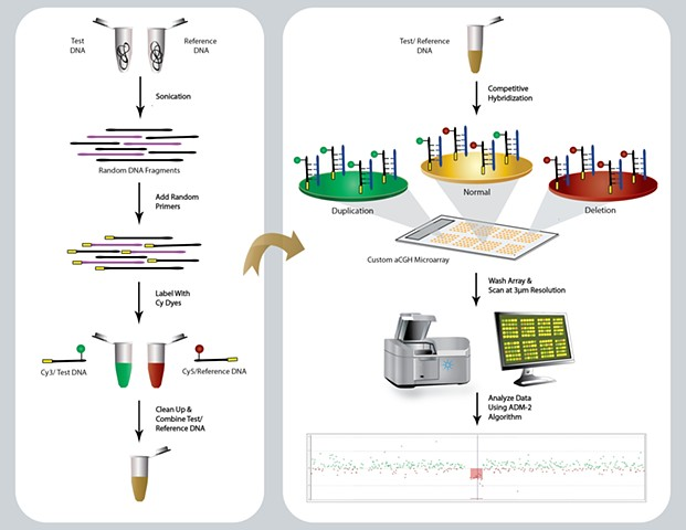 Agilent aCGH (Array Comparative Genomic Hybridization) Methodolgy  Adobe Illustrator