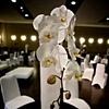 Modern Design - White Phalaenopsis Orchid