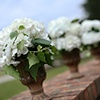White Hydrangeas in Rustic Urns