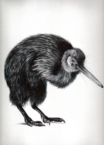 laura Usowski, Art, Bird, Drawing