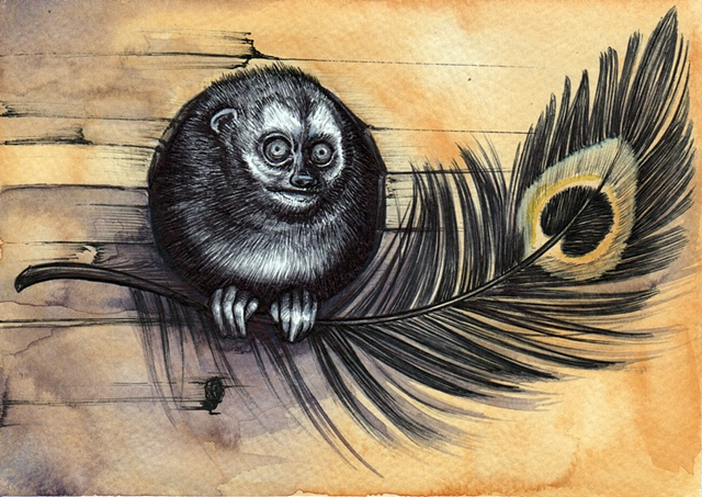 Owl Monkey, Monkey, Illustration, animal Illustration, Watercolor,animal  Sketch