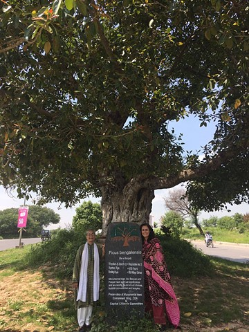 A protected banyan with activist Tahira Abdullah and Fauzia Minallah