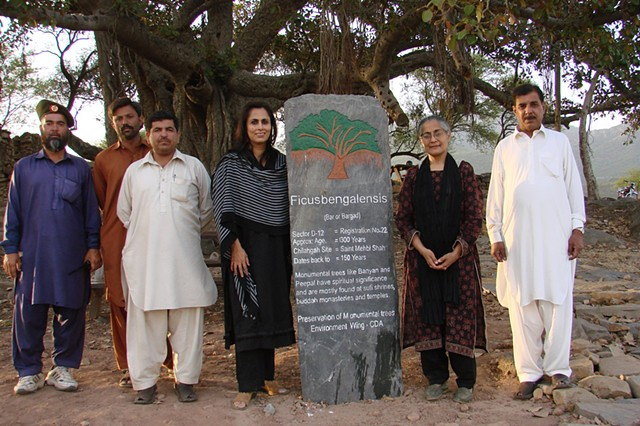 A protected banyan with activist Tahira Abdullah, Fauzia Minallah and staff of Capital Development Authority