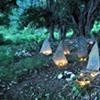 My Sacred Spaces - Chitarkari and banyans