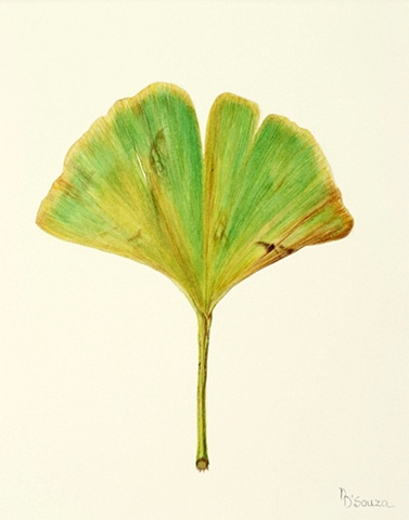 single gingko leaf. One of three in the series.