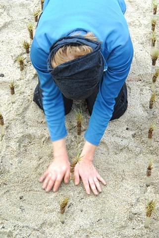 Hannah Verlin Agro-Culture process