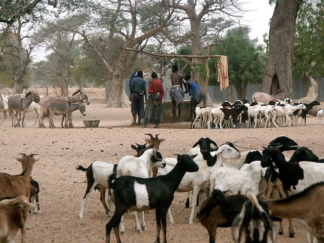 Village life in Senegal
