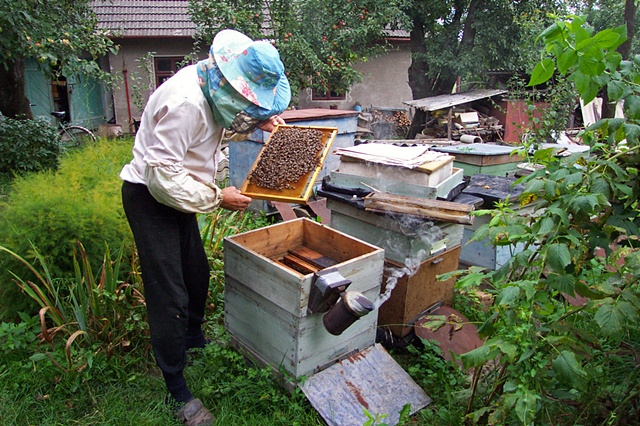 Checking the bees
