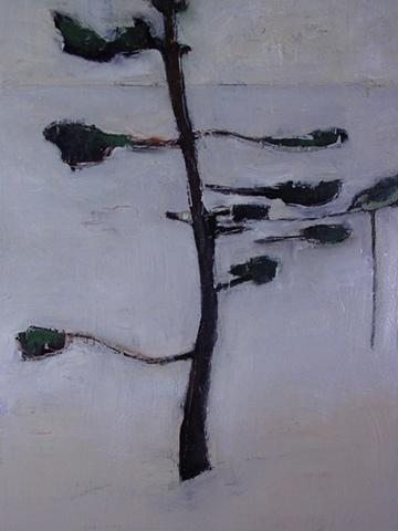 Bare White Pine