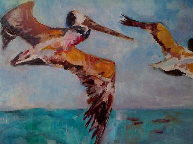 Pelicans at the Hook, Santa Cruz