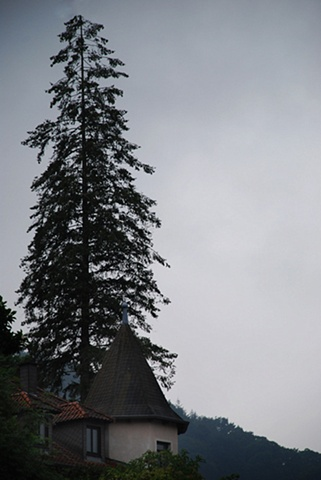 Der Baum auf dem Berghang