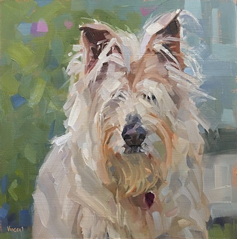 Dog art, dog, blue, scruffy, pet portrait, commission, gift, Patti Vincent art, studio