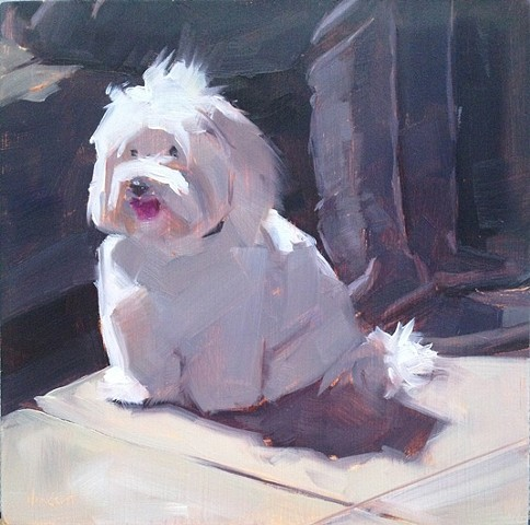 dog painting oil painting art patti vincent bichon puppy