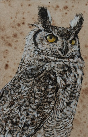 Great Horned Owl Study 1