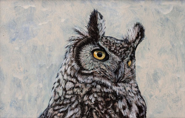 Great Horned Owl Study 2