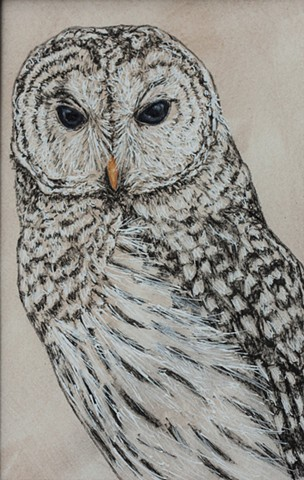 Barred Owl Study 1