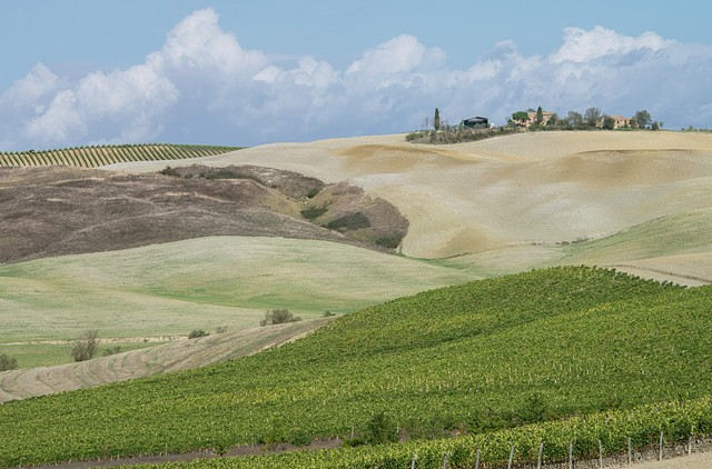 Photo of Tuscan Vineyard with rolling hills and fields of grapevines