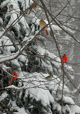 Two Pairs of Cardinals