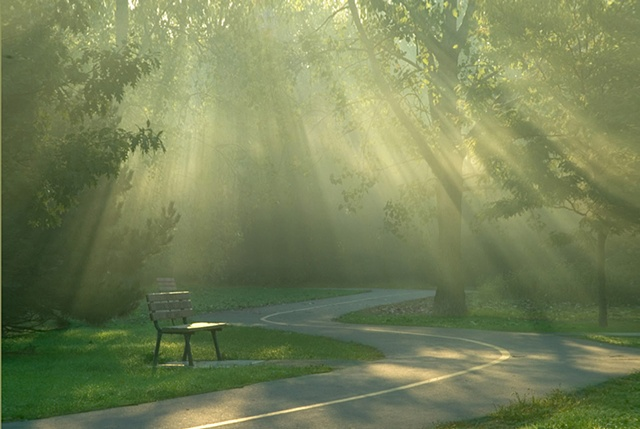 Sunrays though the trees in the early morning mist, with a bench and an s-curve bike path