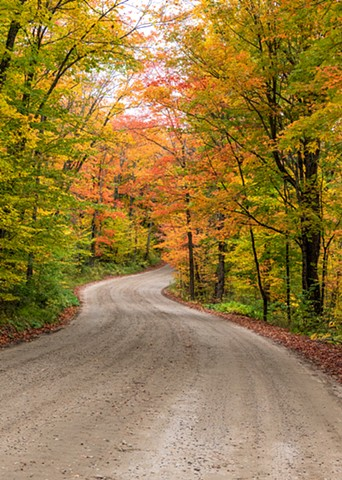 A Winding Road Through the Forest with Colours Changing in the Leaves