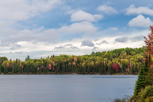 Blue Skies and Puffy Clouds over Brewer Lake in Algonquin Park
