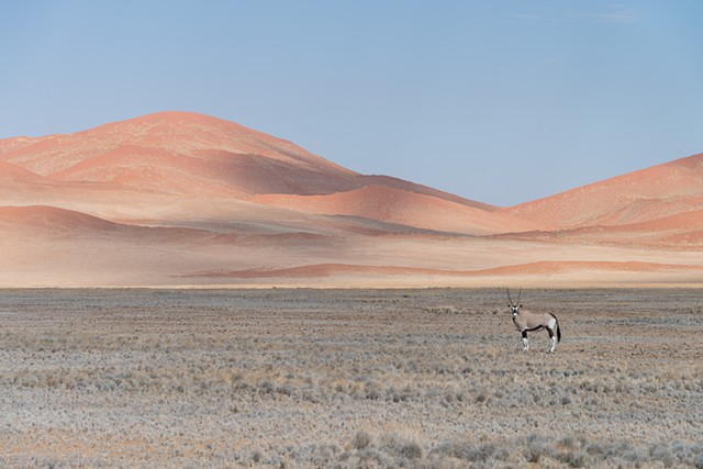 Beautiful colors of the Dunes of Sossusvlei while an Oryx watches