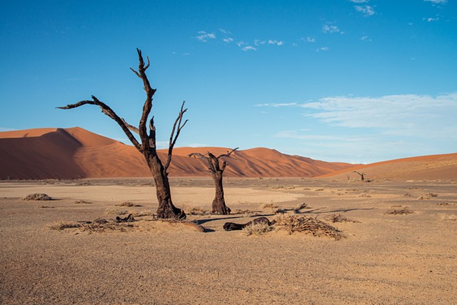 Two trees on the clay pan, surrounded by huge dunes in Sossusvlei, Namibia