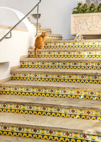 Cat posing on the ceramic tile stairs