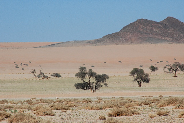 Pastel Desert Sands sprinkled with Acacia trees