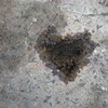 'Concrete Illusions: Not Everything Is As It Seems' Random photo of a found residue oil stain in the shape of a heart