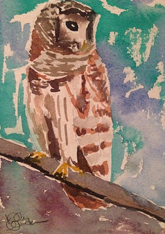 Barred Owl (Original)