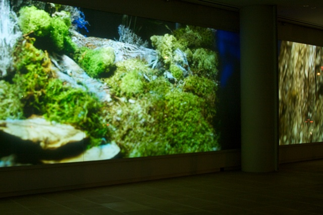 Video/Video Installation