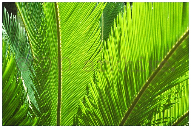 'green leaves'