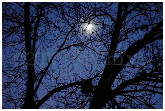 'moon behind black trees'