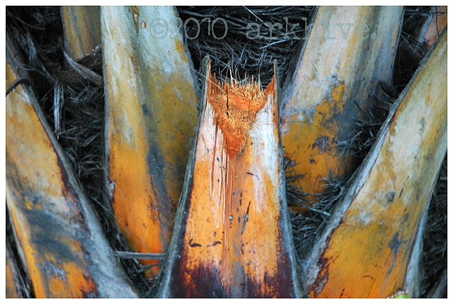 'palm detail II'