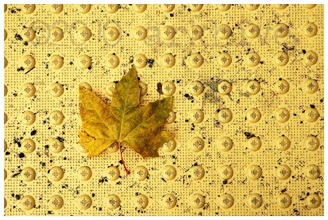 seattle leaf