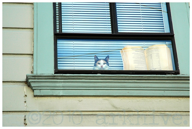 san francisco cat