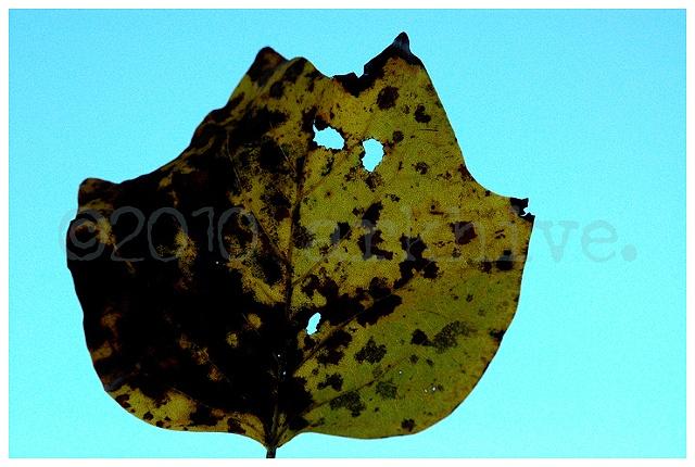 'leaf + sky'