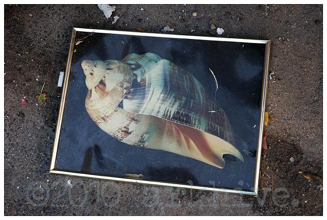 seashell photo greenpoint brooklyn