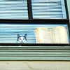'cat in window'