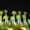 'night palms'