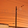 'orange sky + power lines'